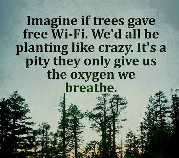 Free Wifi Trees Meme