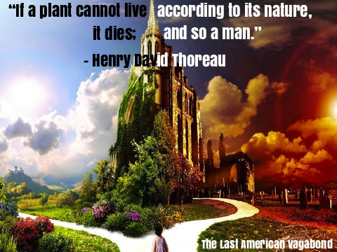 Henry-David-Thoreau-meme