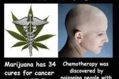 cancer:cannabis