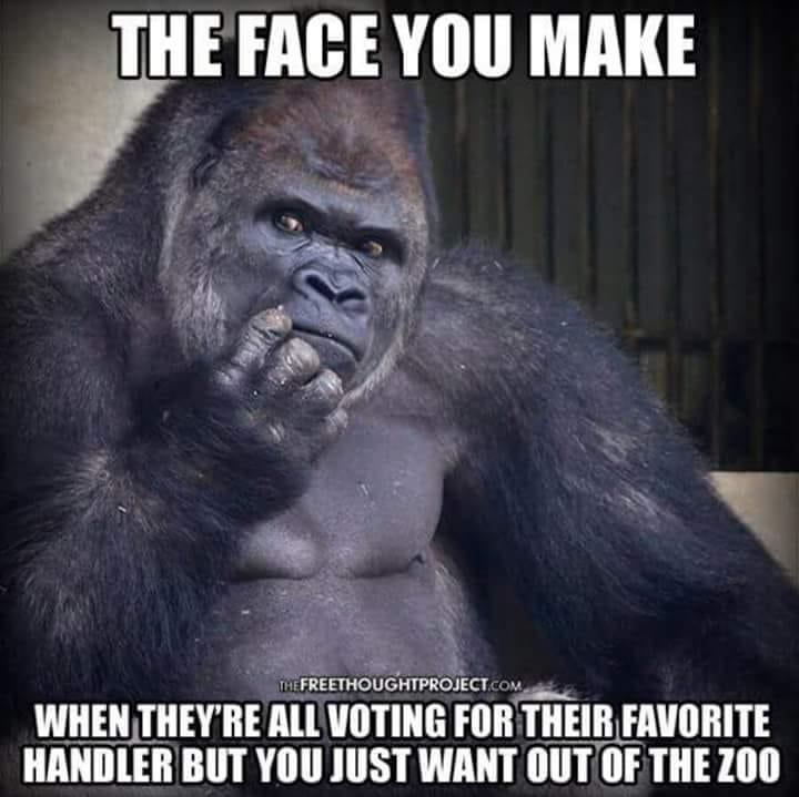 voting-zoo-meme