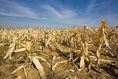decline in food source